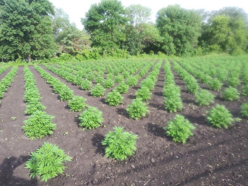 Hemp Growers Must Apply For 2020 In 2020 Growers How To Apply Hemp