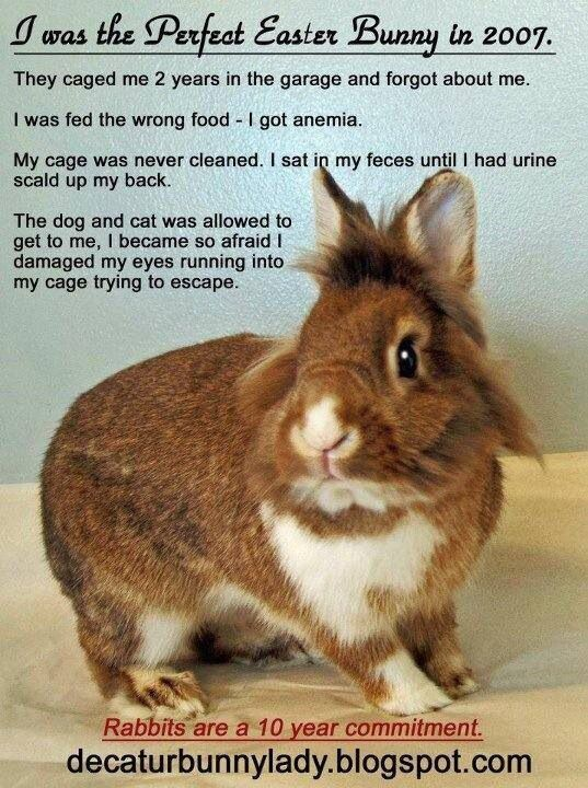 The Truth About Bunnies Given As Easter Gifts Bunny Care Bunny