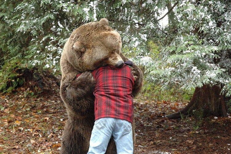 do black bears attack humans - 752×500