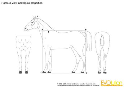 Cavalo 3-View e proporção Básico