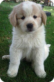 Pin By Theresa Zilska On Cute Animals Love It Pets Golden