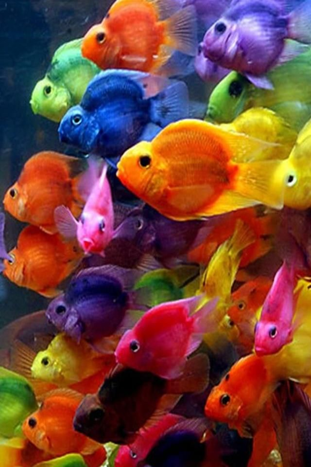 Colorful Fish Iphone Wallpaper Beau Poisson Animaux Beaux La Vie En Couleur