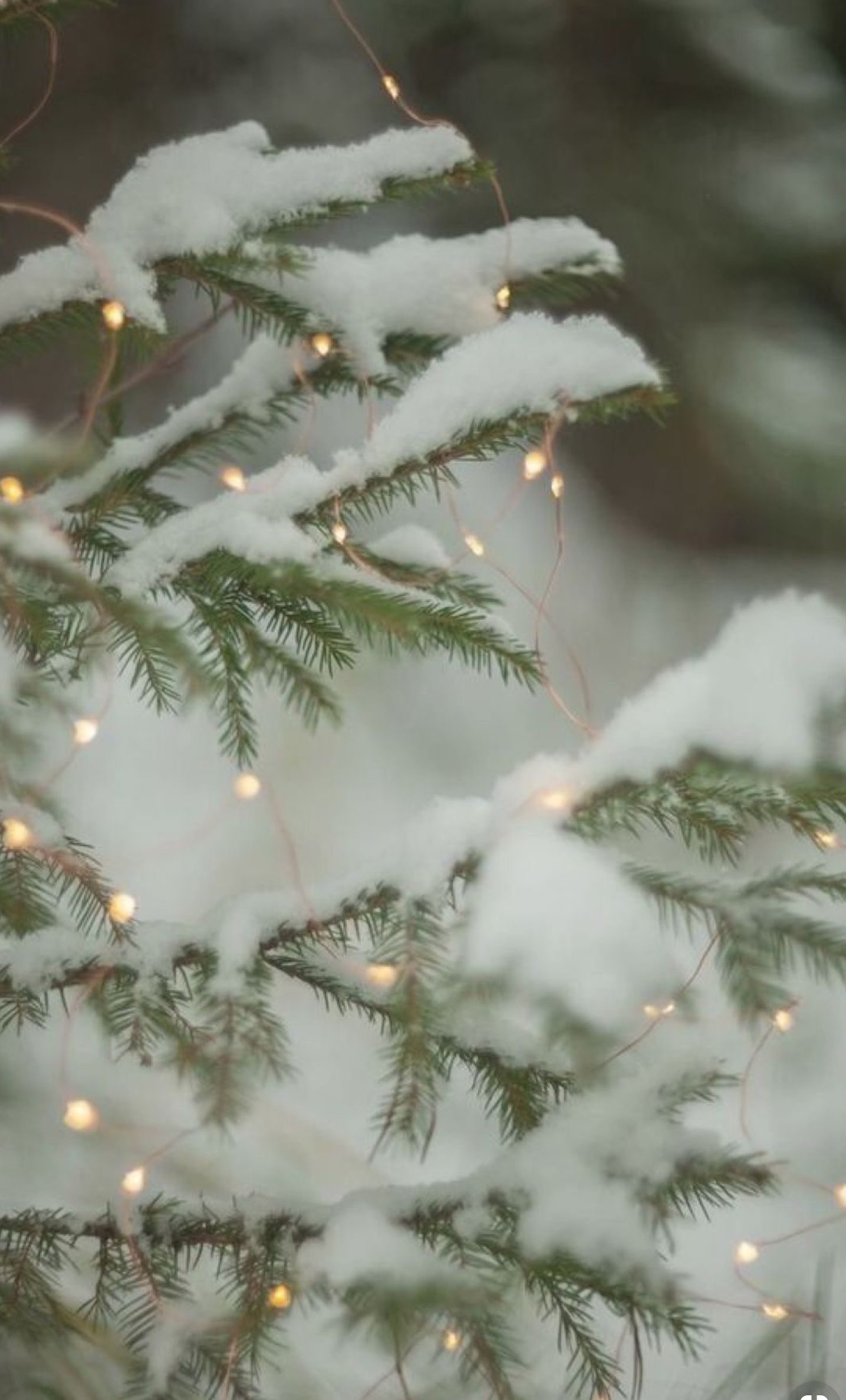 Unlike The Rest At Least The Snow Doesn T Lie The World Is Beautiful But Cold Cold To The Point It B Christmas Wallpaper Winter Christmas Christmas Lights