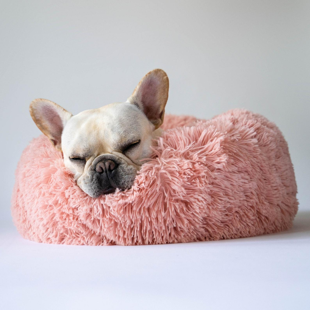 Fluffy Dog Bed for Small Dogs, French Bulldogs, Pugs, Boston Terriers#bed #boston #bulldogs #dog #dogs #fluffy #french #pugs #small #terriers
