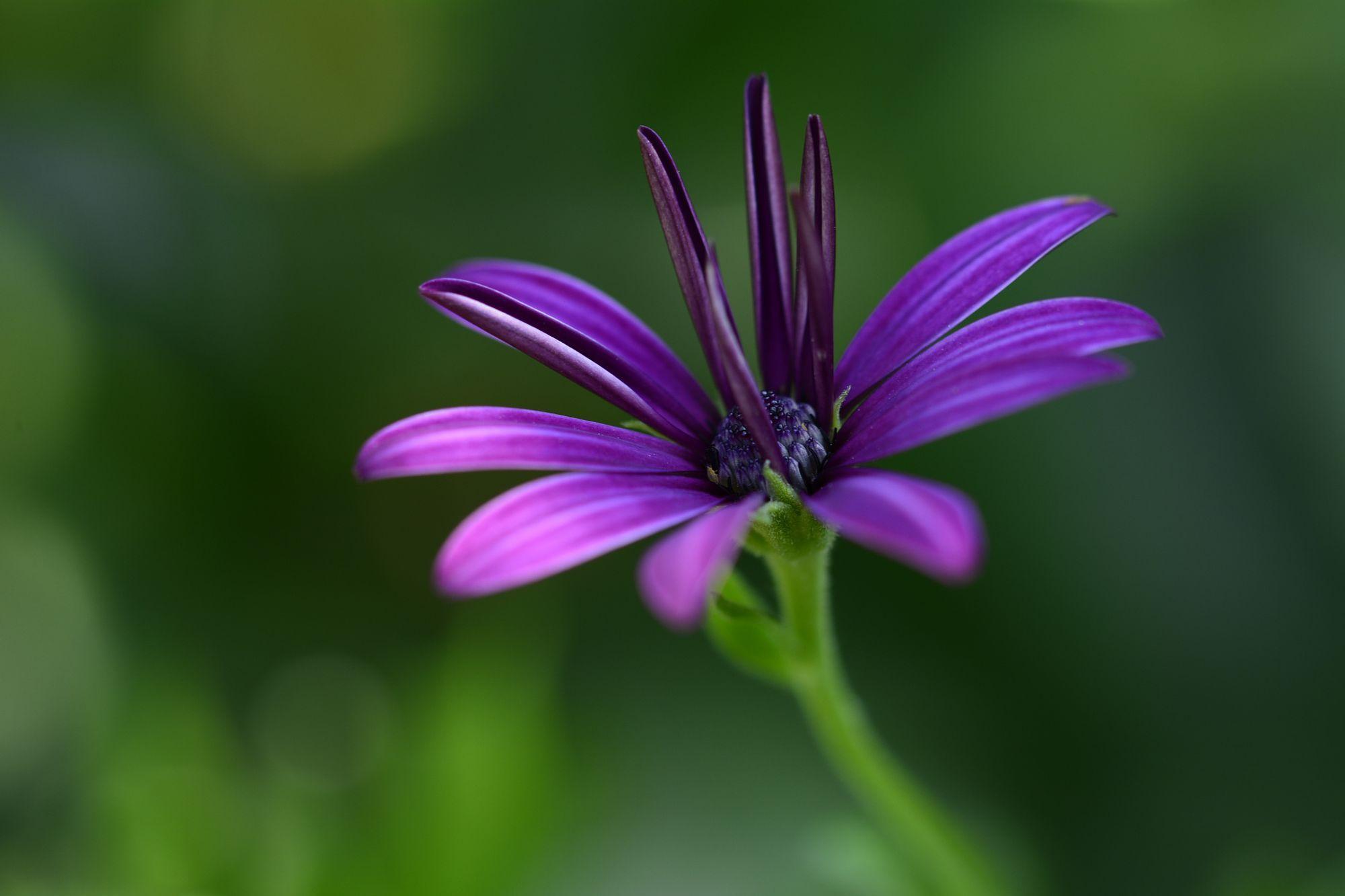 purple flower  Macro photo by Sultann http://rarme.com/?F9gZi