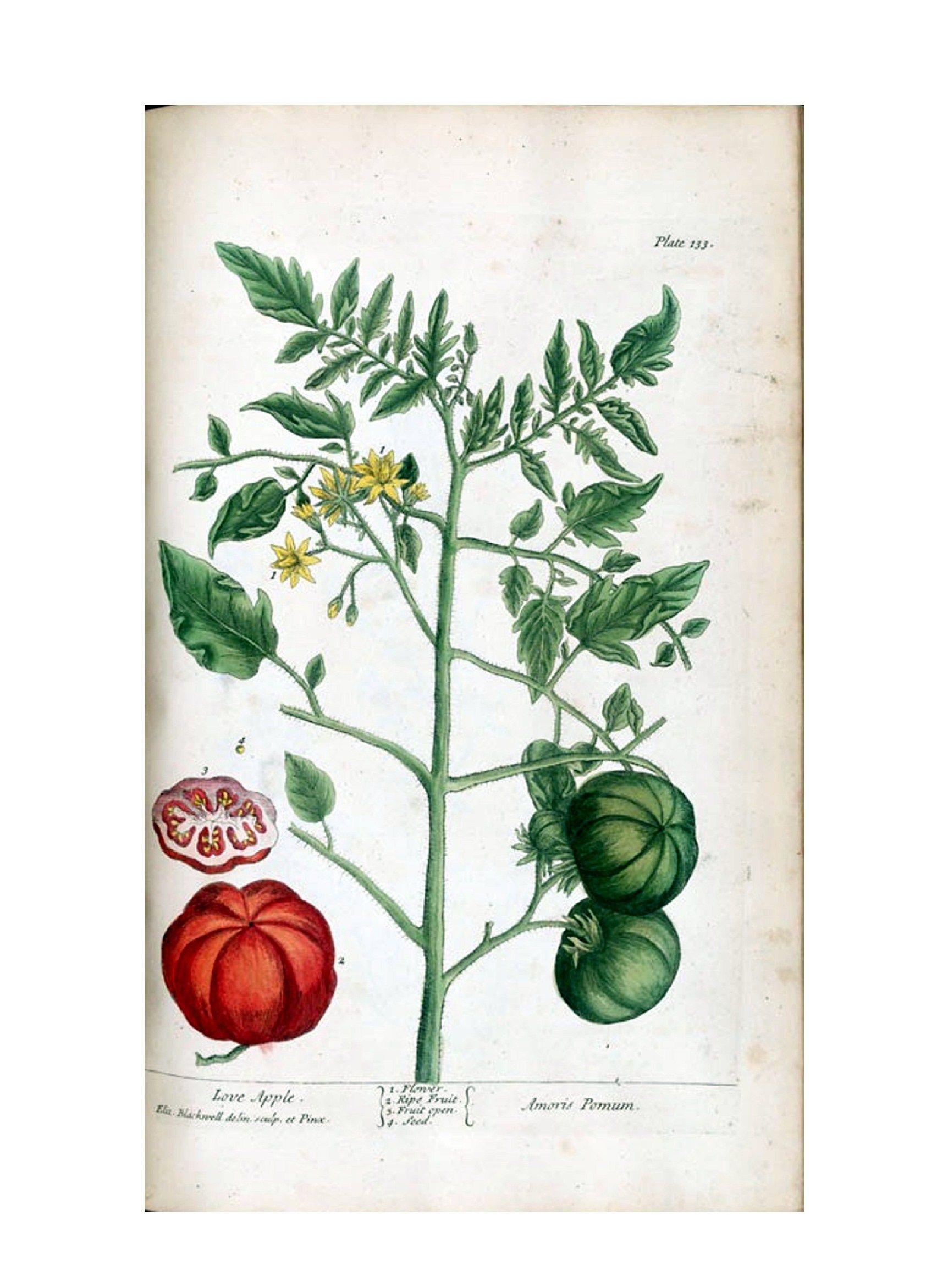 botanical illustrations - Google Search