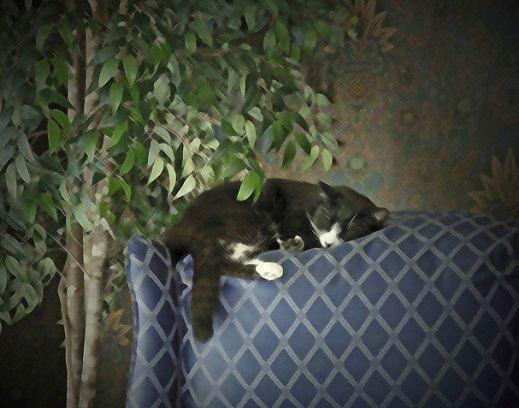 Painted Sleeping Schubert Kitty Cat Kitten Catnap 11x14 in. Fine Art Photography Photo Print