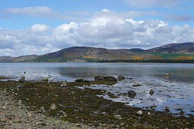 Loch Fleet, just north of Dornoch on the north east coast of Scotland.  A wonderful place to visit, full of wildlife from a variety of birds to seals sunbathing on the sand banks. Its very peaceful and ideal not only for seeing wildlife but to relax and ge away from it all.