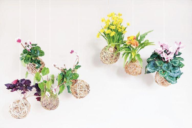 Hanging Kokedama - bulbs in Kokedama #Kokedamascolgantes