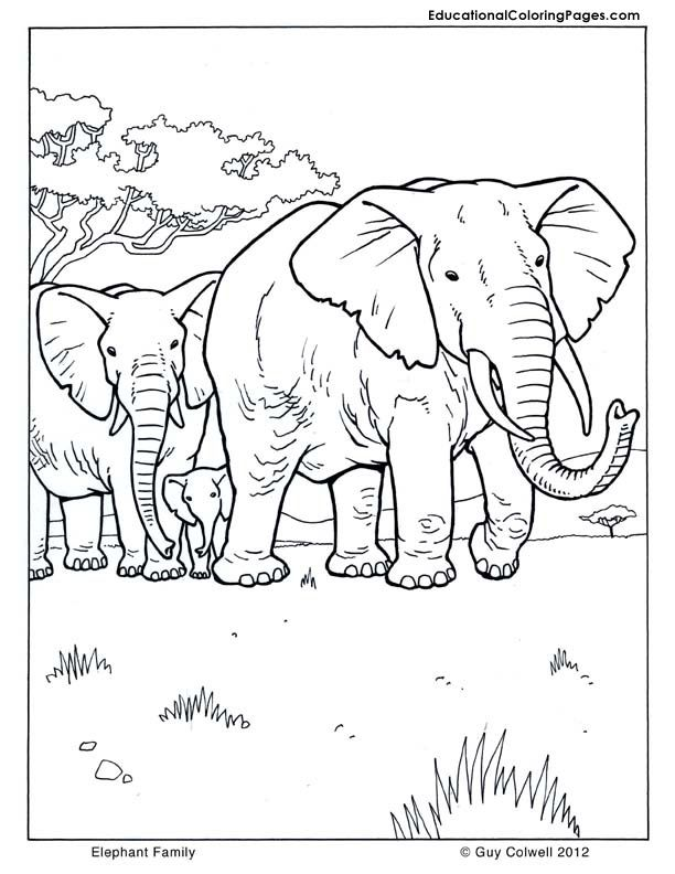 animal pictures coloring pages Animal Coloring Pages for Kids