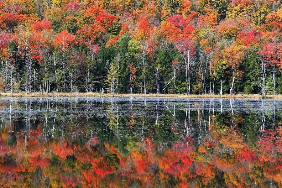 Vermont in fall | Fall In Malboro Vermont Photograph
