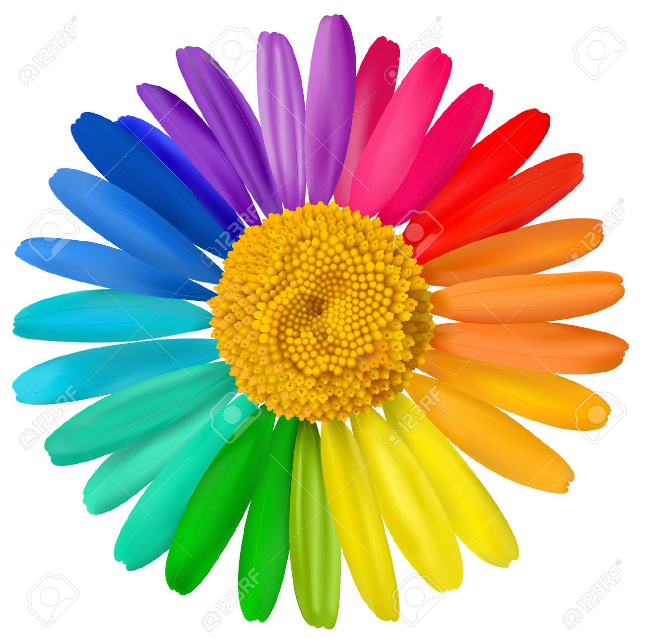 bright color flowers - Google Search