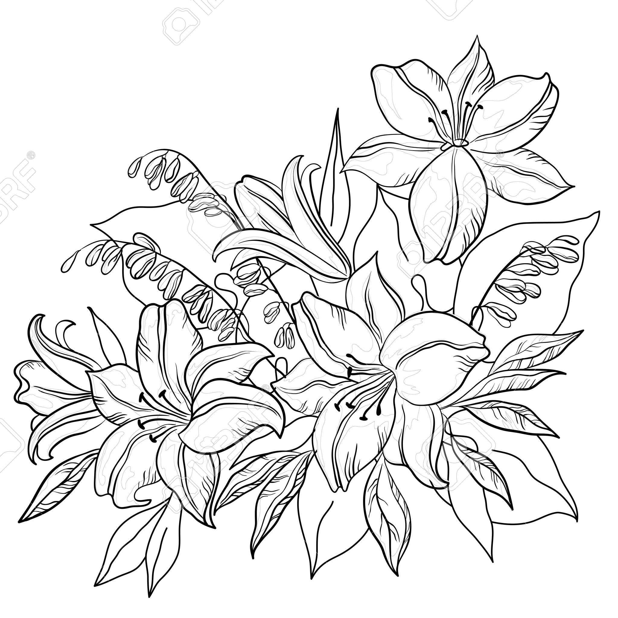 Fleurs Et Feuilles De Lily Et Mine Vecteur Contours Monochromes Kleurplaten Bloemen Kleurplaten Kleuren