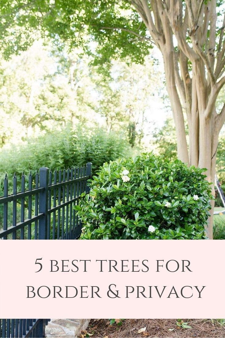 A Tour of my Yard & Privacy Trees for Backyard I recommend is part of Privacy trees backyard, Privacy trees, Privacy landscaping, Privacy plants, Yard privacy, Best trees for privacy - If you're about to start planting privacy trees for your backyard, allow me to help! I'm sharing with you my yard and what are good trees for privacy  Take a look at the pro's and con's of evergreen privacy trees from the big to the small trees for privacy!