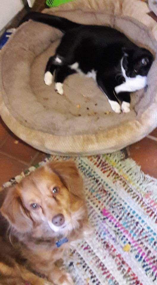 Back Home Dog Name Ben Mix Meriden, CT, USA 06450