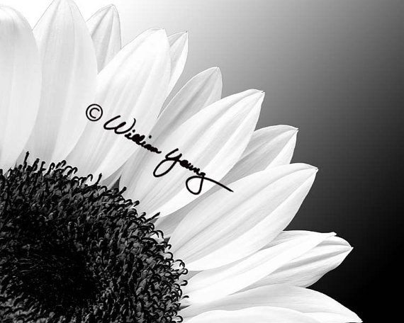 Sunflower in black white by gallery316 on etsy sunflower photographyfarm photographyphotography flowersphotography tutorialsphotography