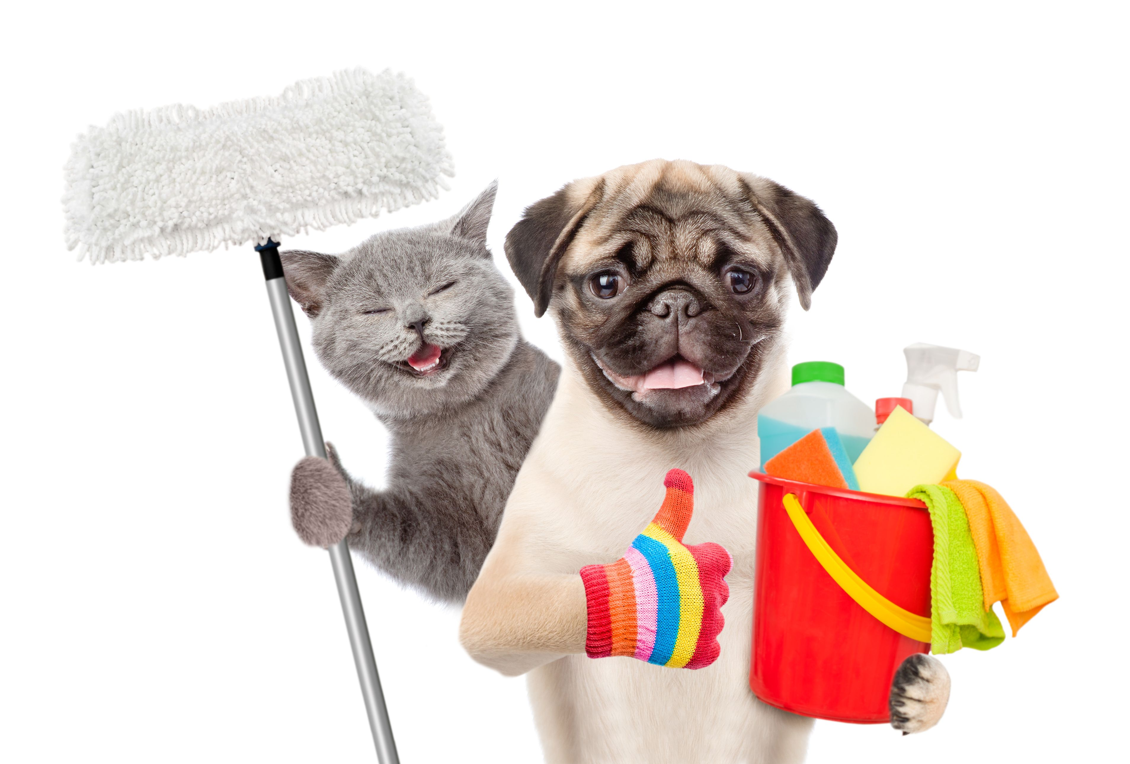 Tips For Maintaining a Clean Home Part 5 When You Have