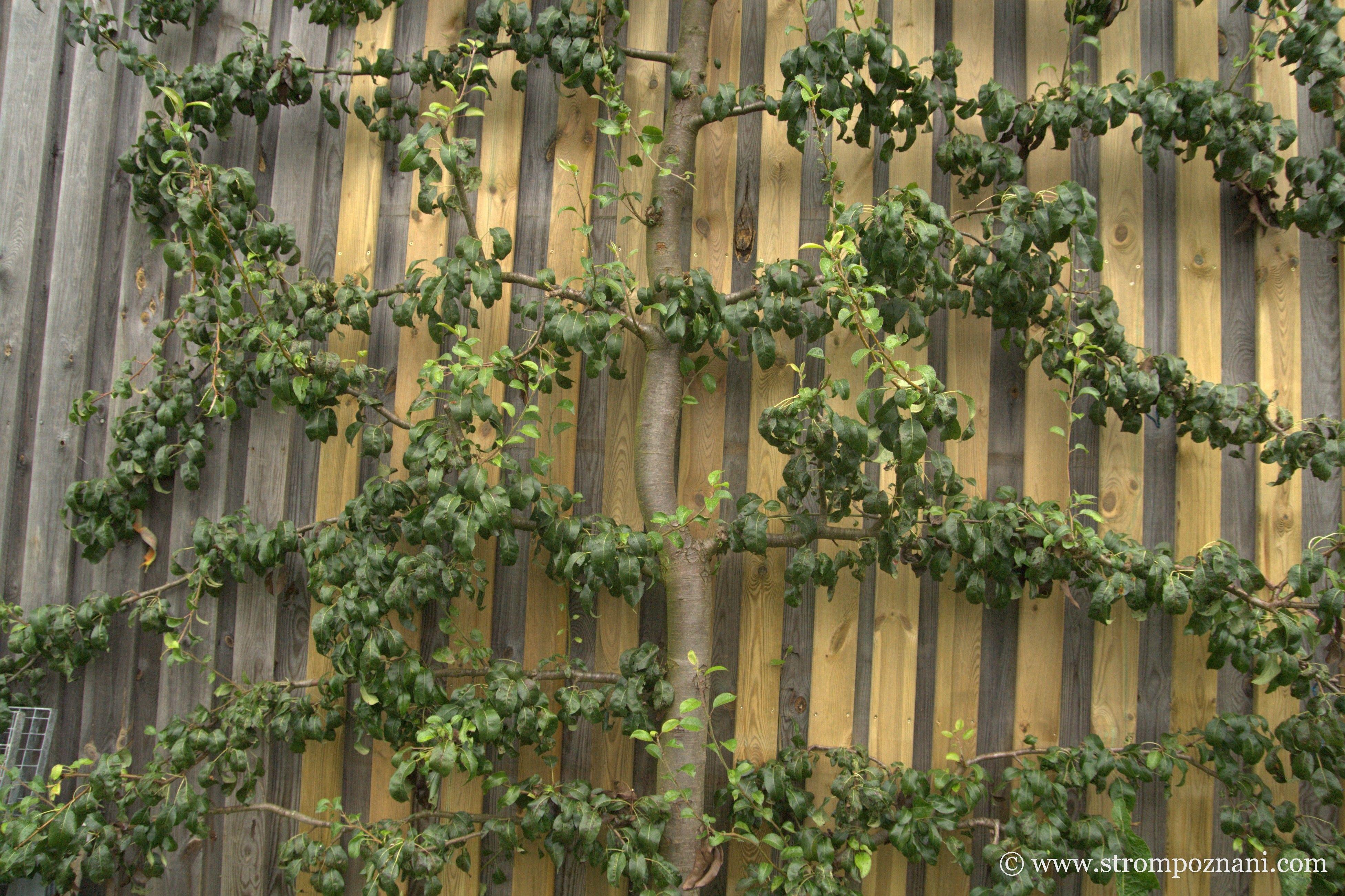 Pin by Strom poznání, z.s. on Nature Garden - Kamp / Arbesbach ...