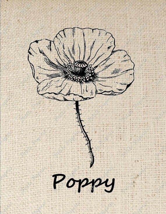 Poppy Flower Iron On Transfer Digital Download Mohnblume Zeichnungen Tattoo Son
