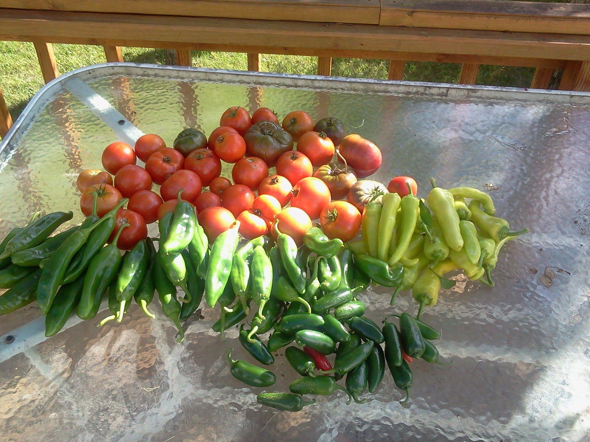 Incroyable Hybrid Rain Gutter Grow System, Kiddie Pool Grow System, The Pop Bottle  Garden!