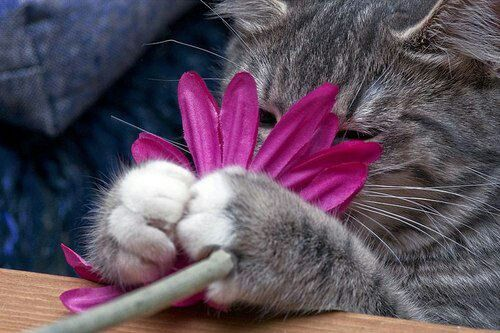 Love Cat Paw ♥ Lovely Cats