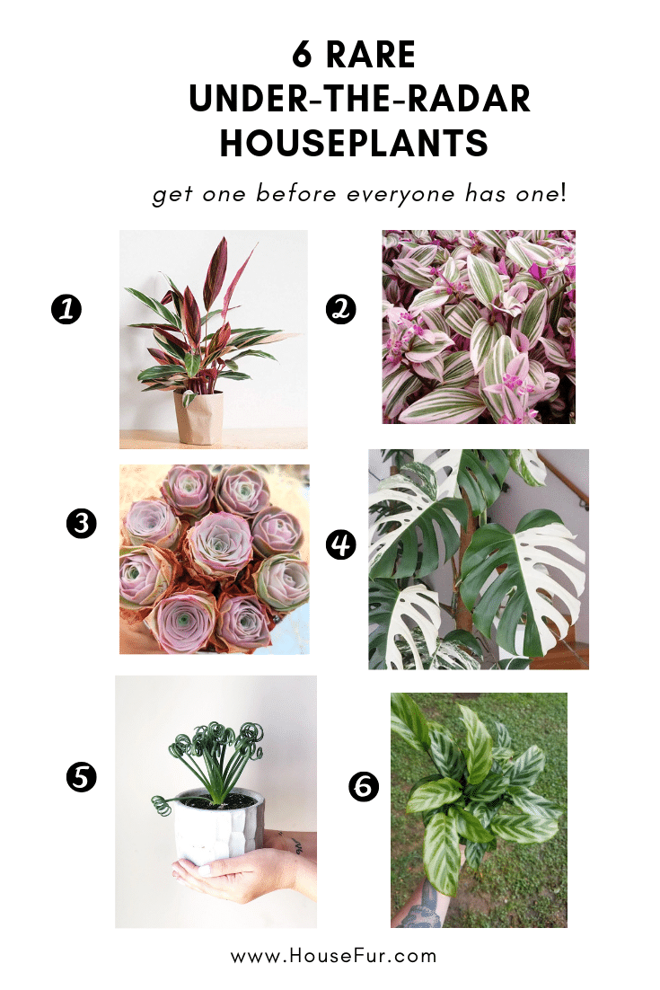 6 Rare Houseplants You Didn T Even Know You Wanted House Fur Houseplants Plants Bathroom Plants