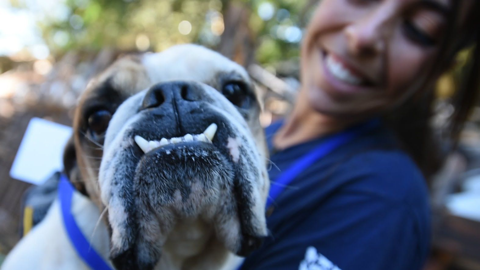The Humane Society Of The United States Puppy Mills Campaign