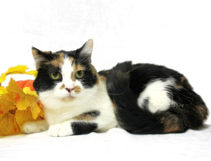 Adopt Steffie on Petfinder in 2020 Cat adoption, Help