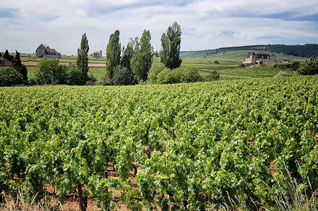 Musigny, Looking toward Clos de Vougeot. Photograph by Amitié Wines. http://www.amitiewines.com