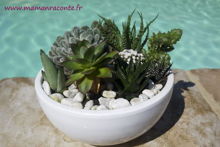 cr er un jardin miniature de cactus et succulentes. Black Bedroom Furniture Sets. Home Design Ideas