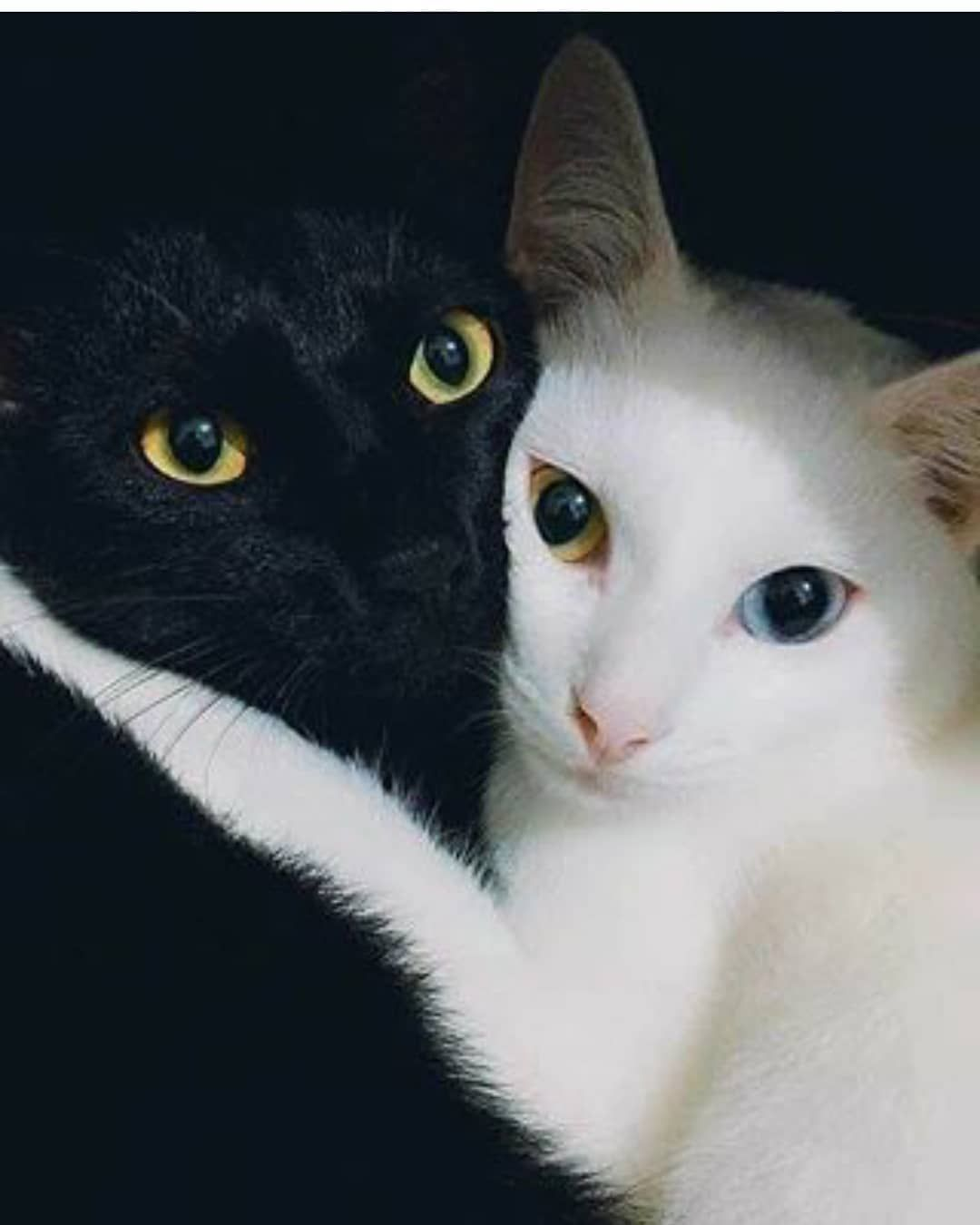 Sweety Cat Tag Your Friends Follow us sweetycats3