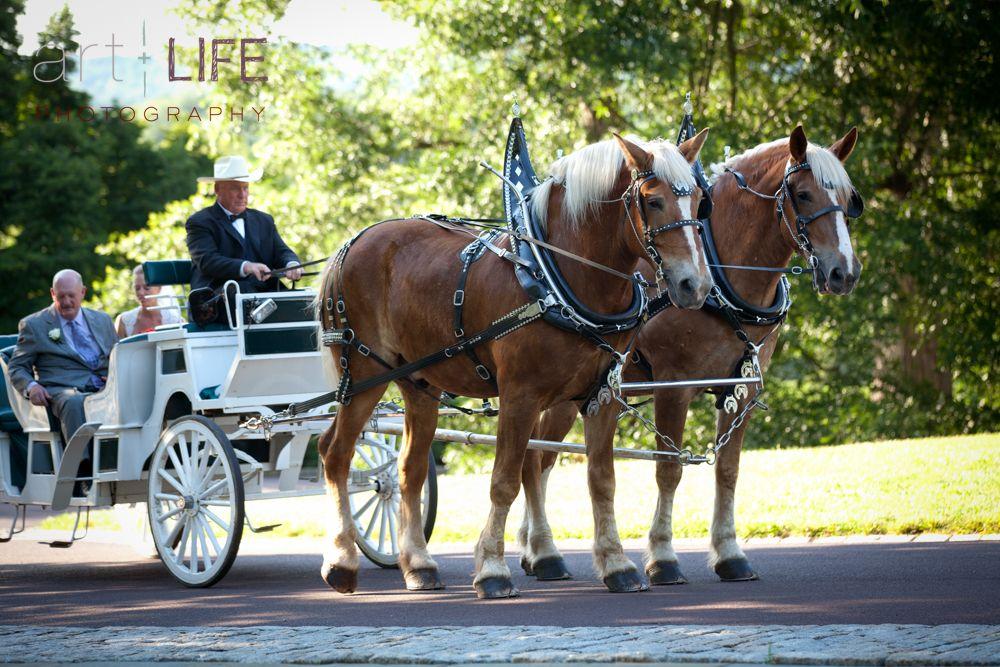 Morris Arboretum Philadelphia  www.artpluslife.com