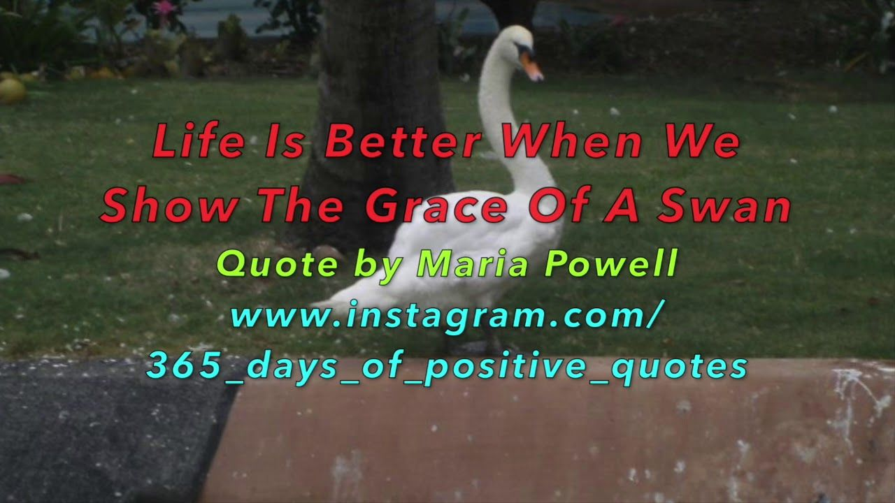 Swan Beauty Quotes - 365 Days Of Inspirational  Quotes - YouTube Videos ...