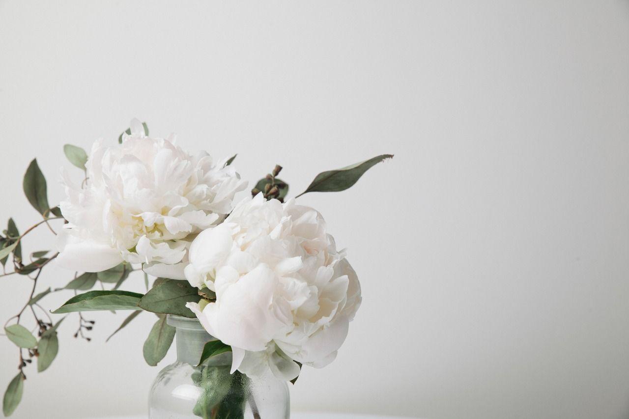 Beauties Pivoines Blanches Fleur Pivoine Fleurs Blanches Pivoine Blanche