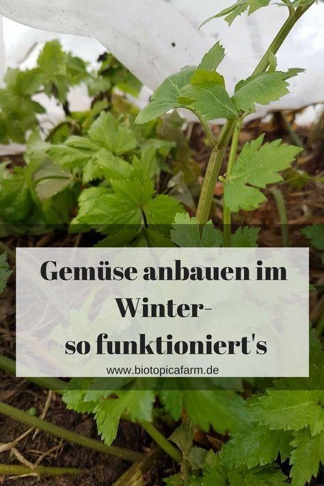 Selbstversorgung rund ums Jahr- Frisches Gemüse auch im Winter #vertikalergemüsegarten