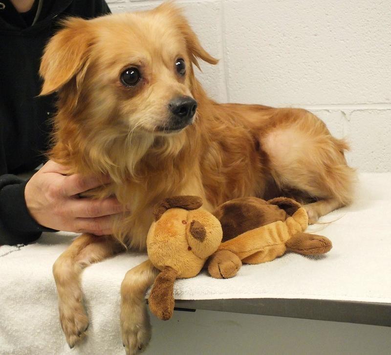 Adopt rascal on petfinder animal shelter pet adoption