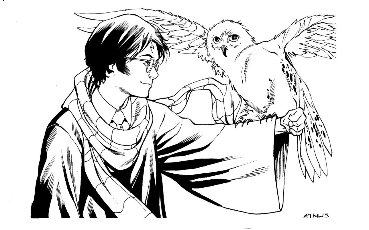 Funny Ds Harry Potter And Owl