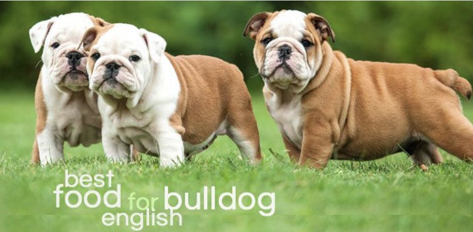 What Is The Best Dog Food For English Bulldogs Most Expensive