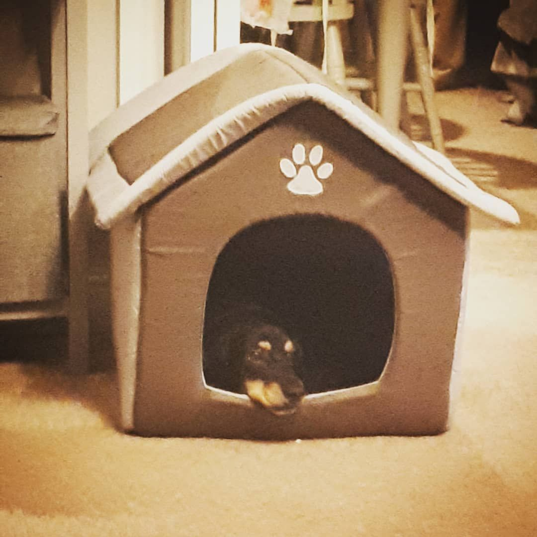 She Loves Her Little House Rescuedog Doghouse Greekrescue