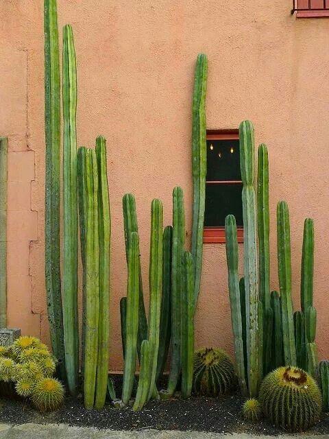 Cactus house exterior pinterest cuadernos de dibujo for Cactus de exterior
