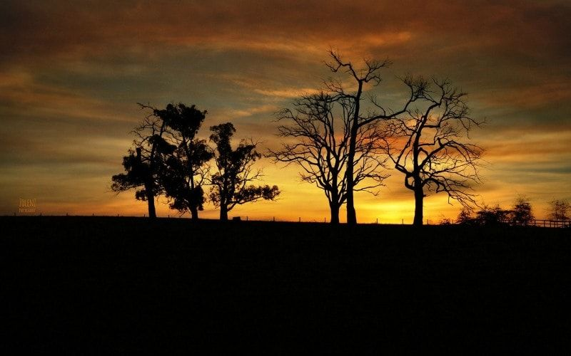 Background Dark Earth Shade Silhouette Sunset Tree Trees Wallpaper Preview Dark Background Wallpaper Nature Wallpaper Tree Wallpaper