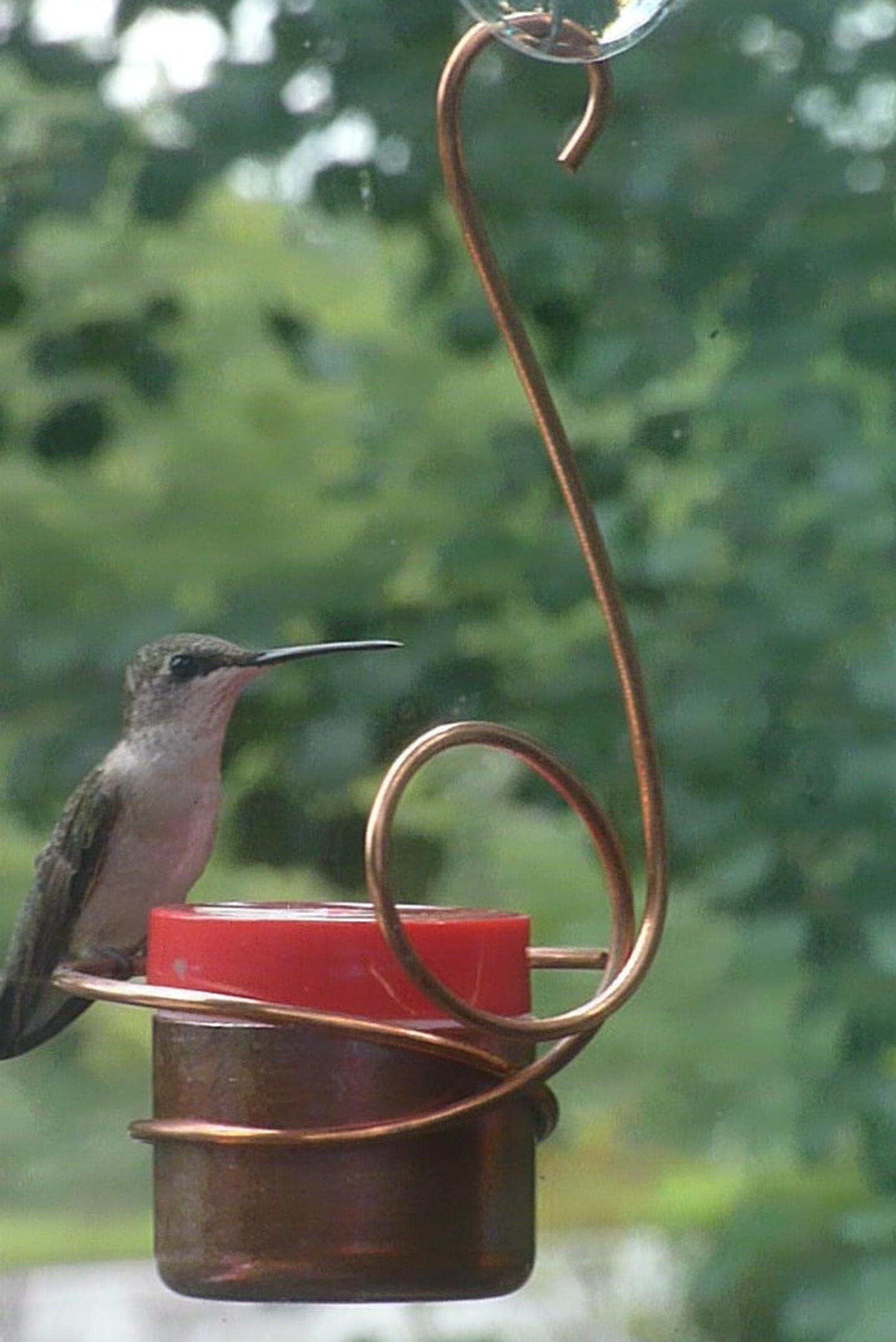 Pin on Bird feeder ideas