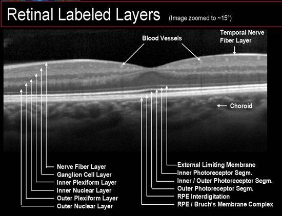 Layers of the Retina Oct | Oct Retinal Layers