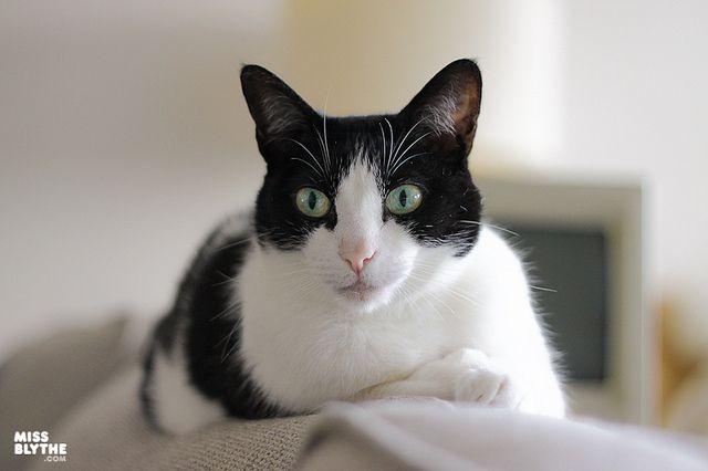 Maria looking attentive by MissBlythe, via Flickr