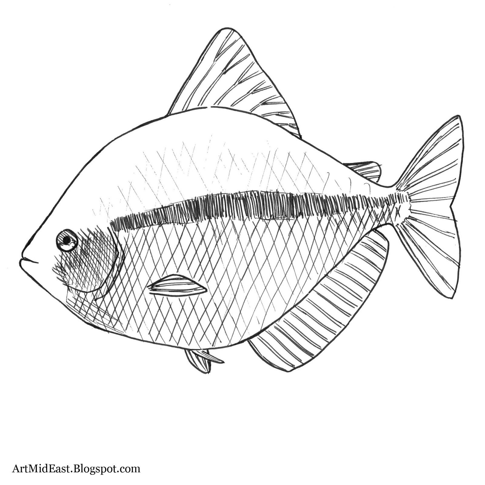 How To Draw A Fish: Step By Step  Drawing Lessons