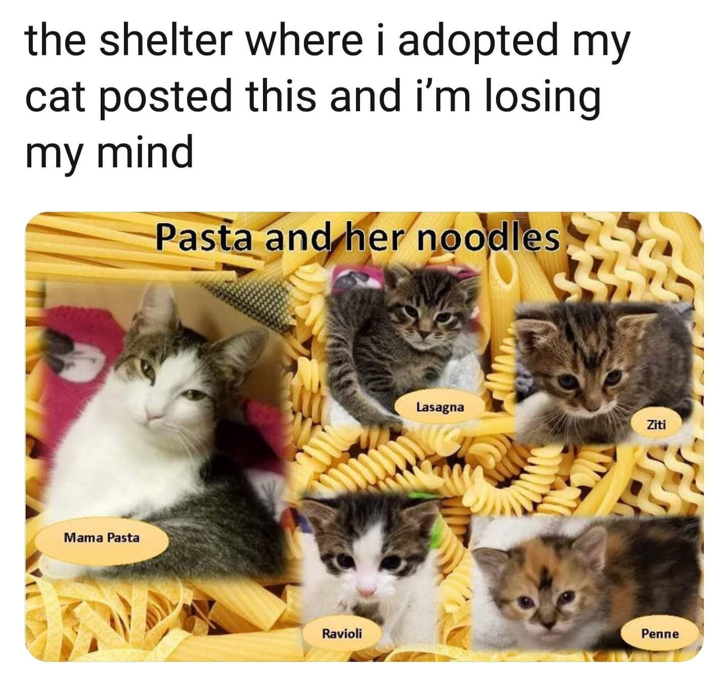 Mama Pasta And Her Noodles Beautiful Cute Cat Images Pinterest