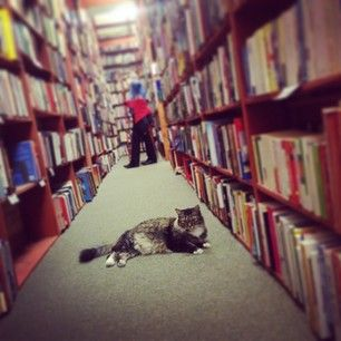 Please step aside… | An Ode To Bookstore Cats