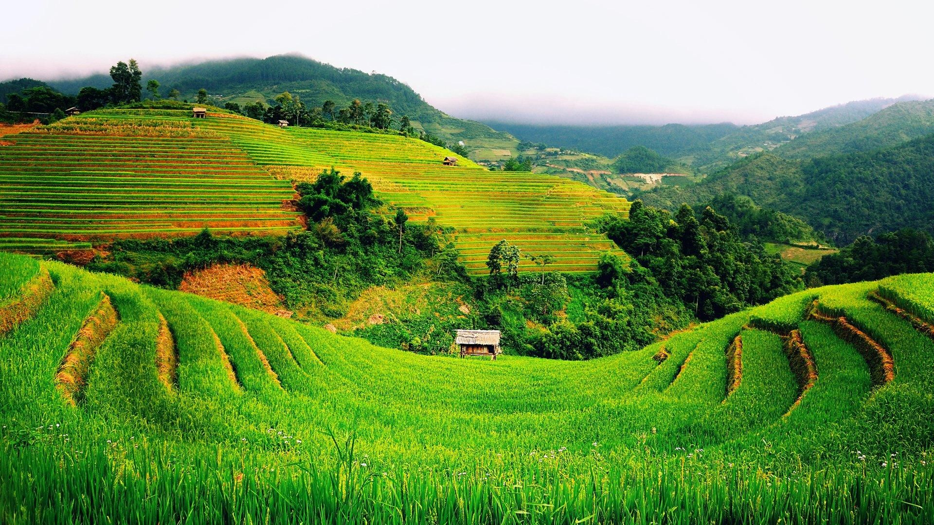 1920x1080 Beautiful Terraced Green Field HD Wallpapers ...