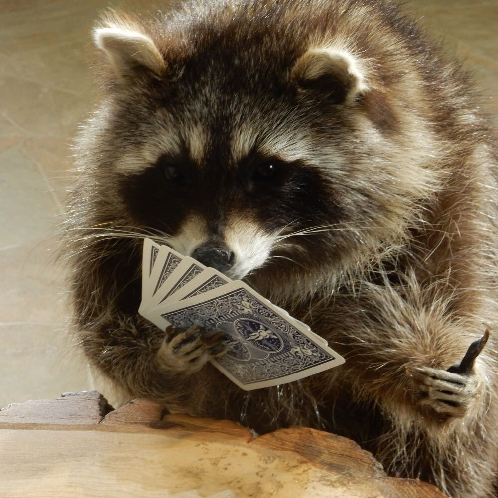Racoons cheat. Julianne McPeters no pin limits Cute