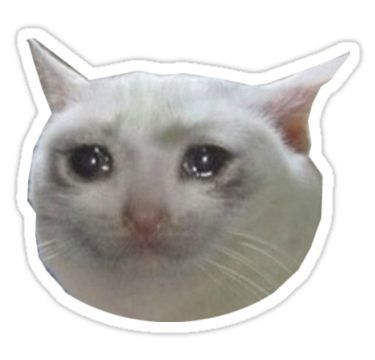 'crying cat . jpg' Sticker by so basically i'm baby in ...